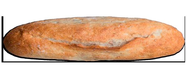 panVega1
